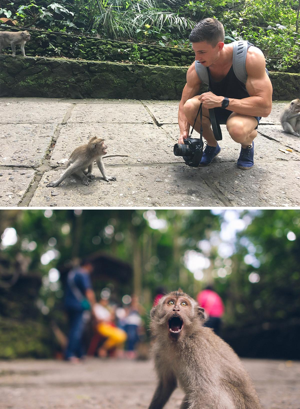 fitnessblog-fitnessblogger-fitness-blog-blogger-stuttgart-dreamteamfitness-monkey-forest-ubud-bali