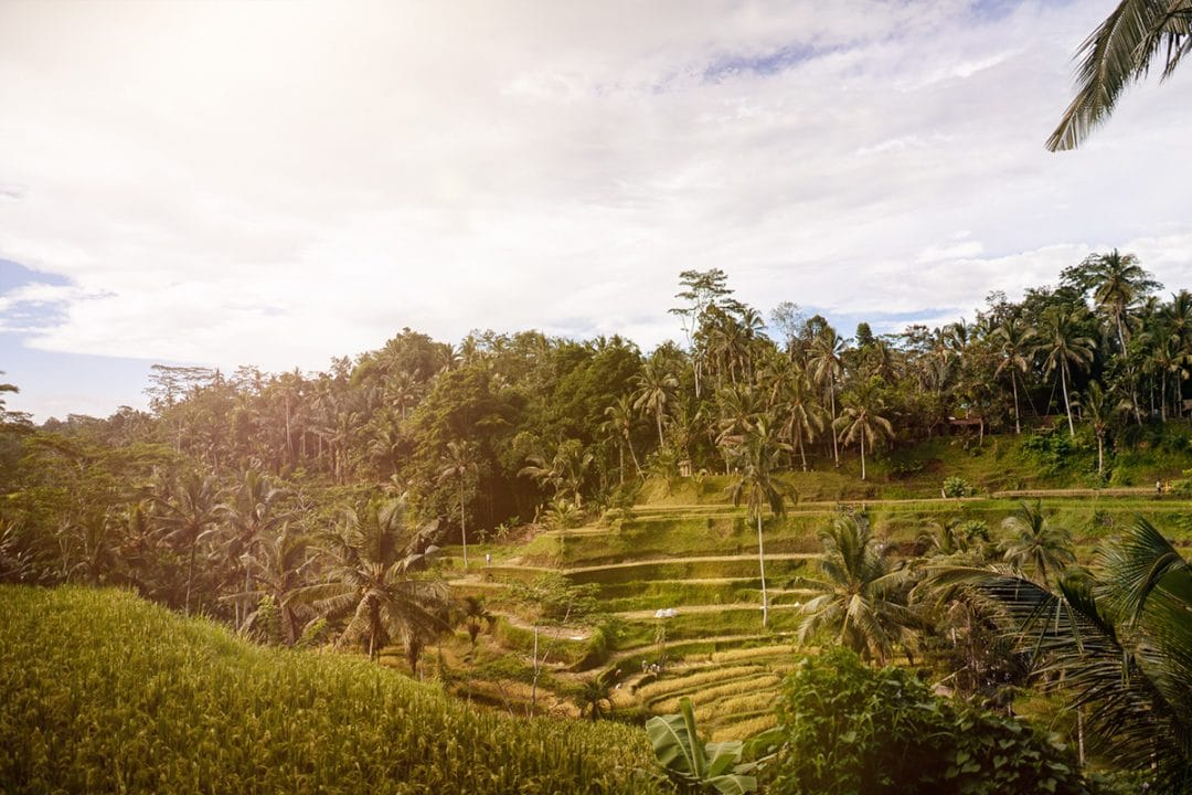 Rice terraces, Bali, Ubud, Camp, Trip, Trip